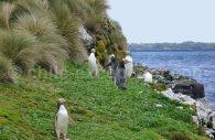 enderby iles auckland