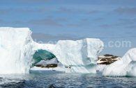 icebergs antarctique