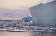 Iceberg et glaciers, Antarctique © Alex Benwell