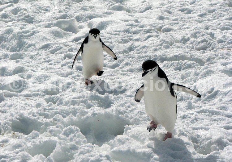 iles sandwich antarctique