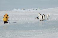Rencontre avec des manchots empereurs, péninsule Antarctique © Lynn Woodworth