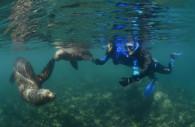 Buceo con los lobos marinos, Peninsula Valdès