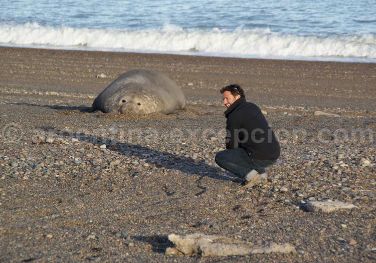 Rencontre avec un éléphant de mer à El Pedral