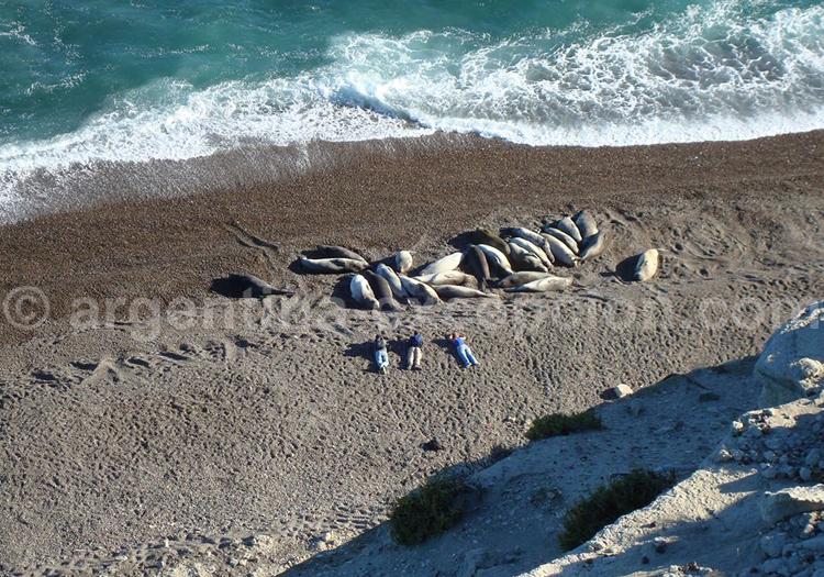Observation des éléphants de mer à l'hôtel El Pedral