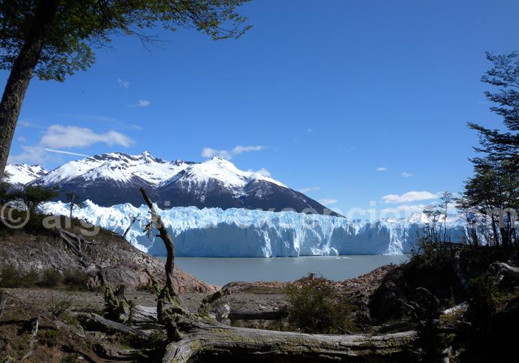 Marche en forêt pour attendre le glacier Perito Moreno
