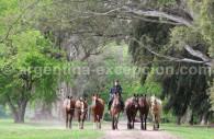 Les chevaux rejoignent leurs écuries
