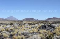 Le Payún Matru et le Volcan Herradura, Cuyo