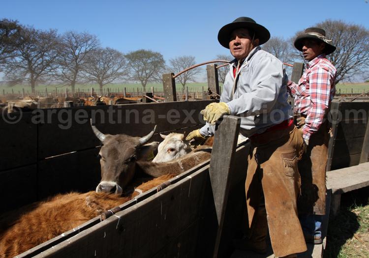 Journée typique d'un gaucho, province de Salta