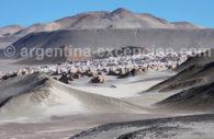 Campo Piedra Pomez