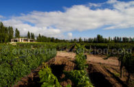 Bodega Algodon Wine Estate, Cuyo