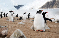 Observación de los pinguinos – CC Facundo Santana