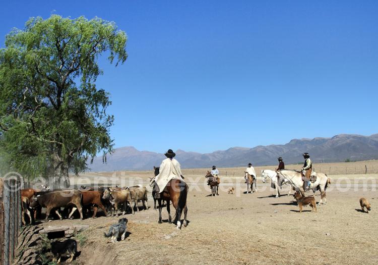Gardiennage des troupeaux, Pampa Grande