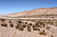 Haute prairie andine, Salta