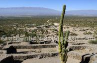 Ruines de Quilmes, Nord-ouest