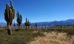 Cachi et le Parc Los Cardones