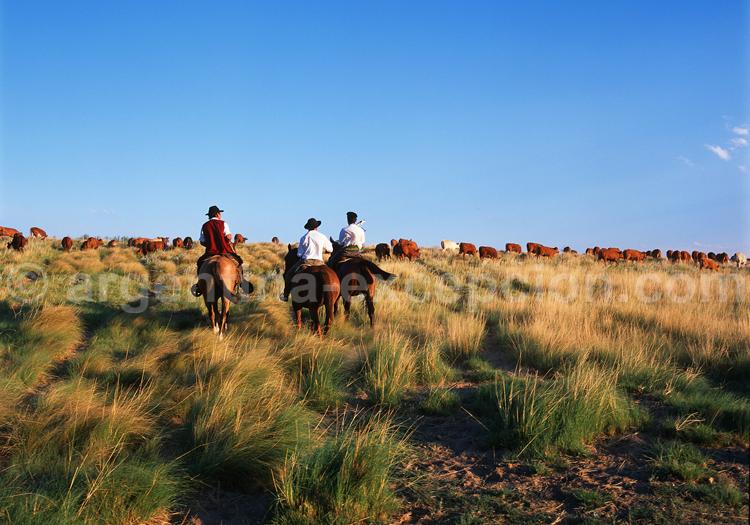 Balade à cheval, estancia patagone