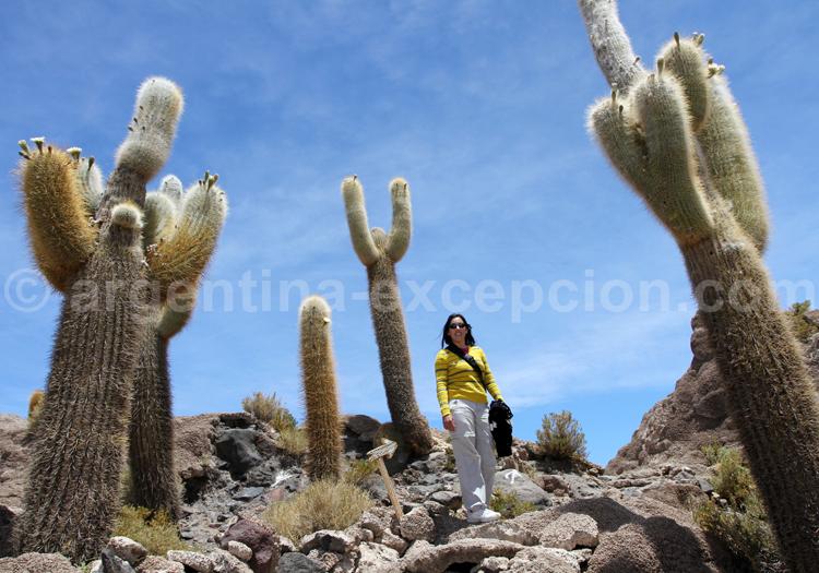 Voyages sur mesure au nord de l'Argentine