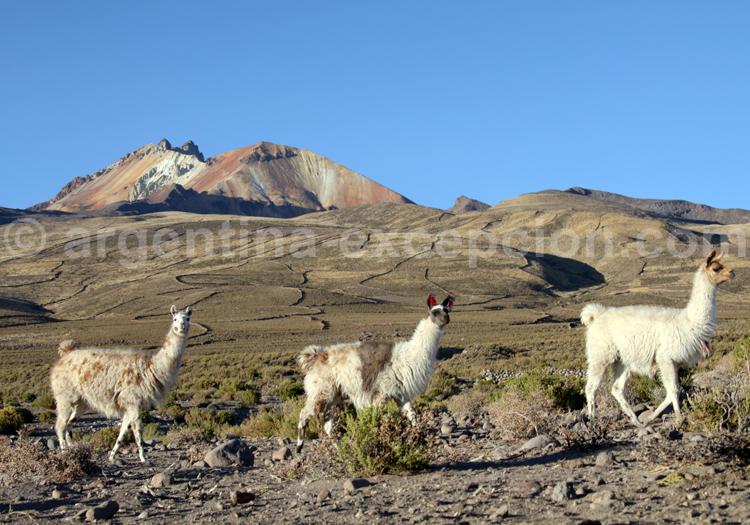 La Bolivie sur mesure