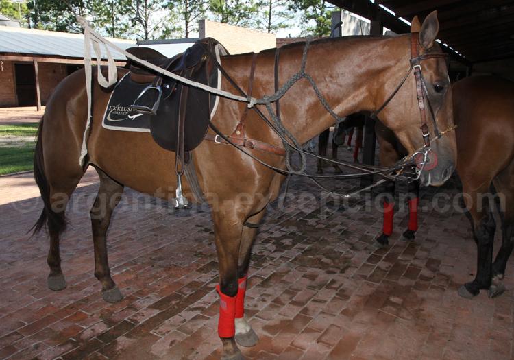 L'Argentine, le pays du polo
