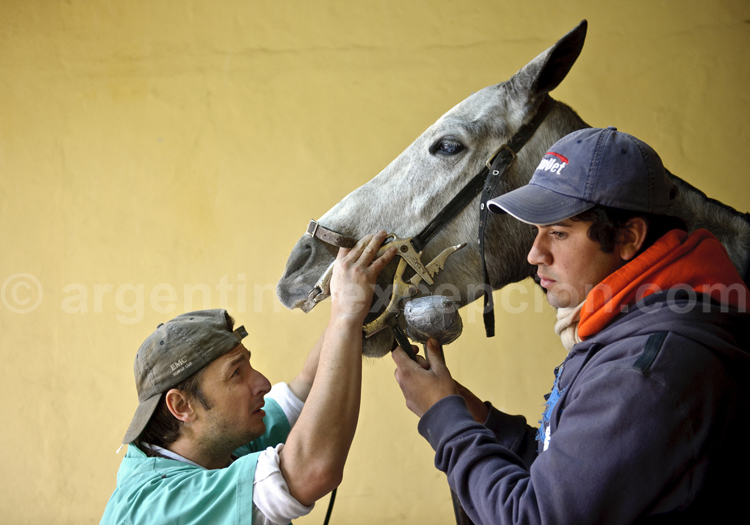 L'Argentine, pays du cheval