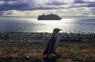 Rencontre avec les manchots de Patagonie