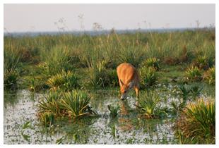 Safari aux Esteros del Iberá