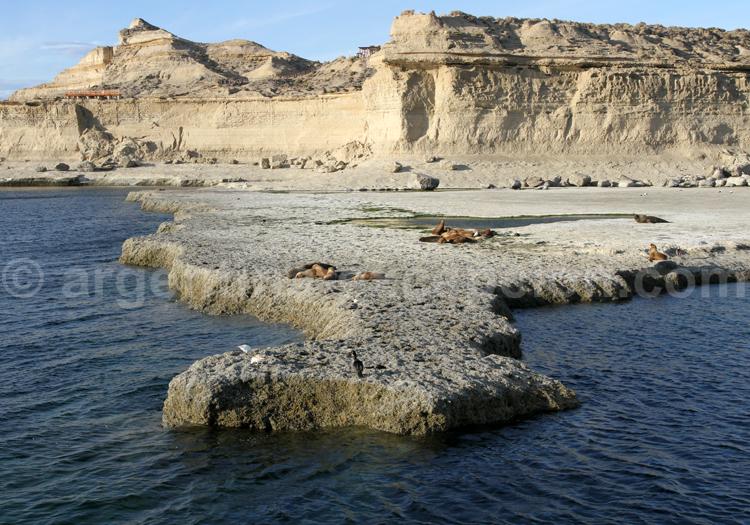 Réserve de Puerto Pirámides