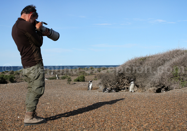 Excursion faune privée, la Ernestina