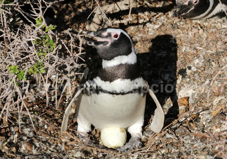 Séjour exclusif en Patagonie