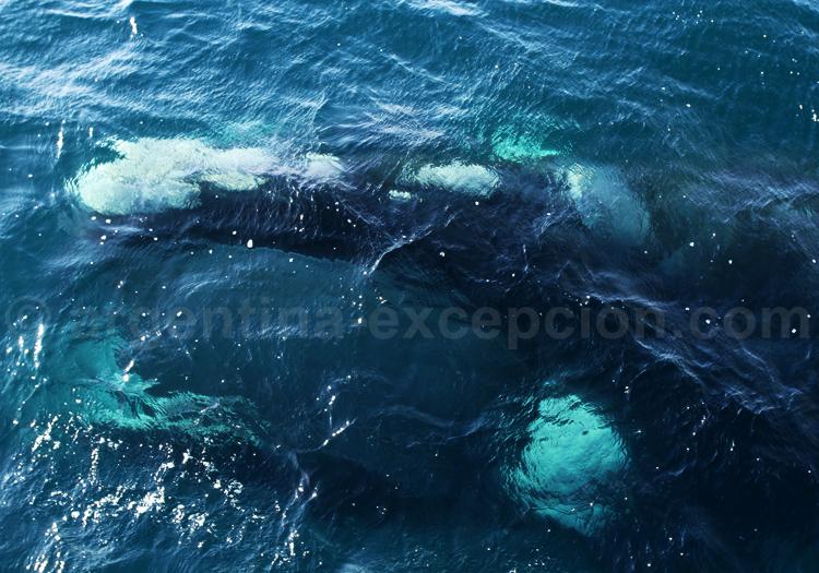 Rencontre avec la baleine franche, Valdés