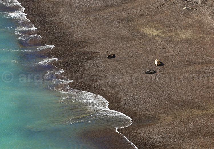 Observation de la faune marine, Valdés