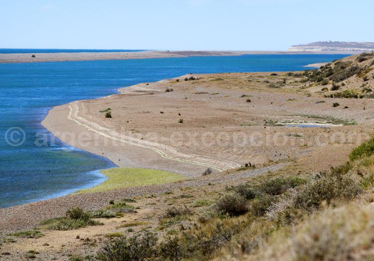 Péninsule Valdés, Patagonie
