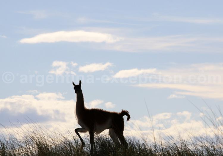 Séjour individuel en Patagonie Argentine