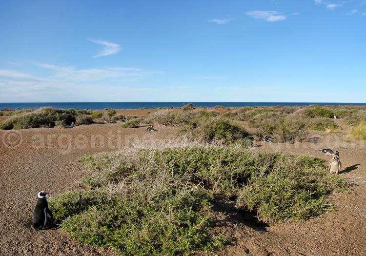 Péninsule Valdés, Patagonie Argentine