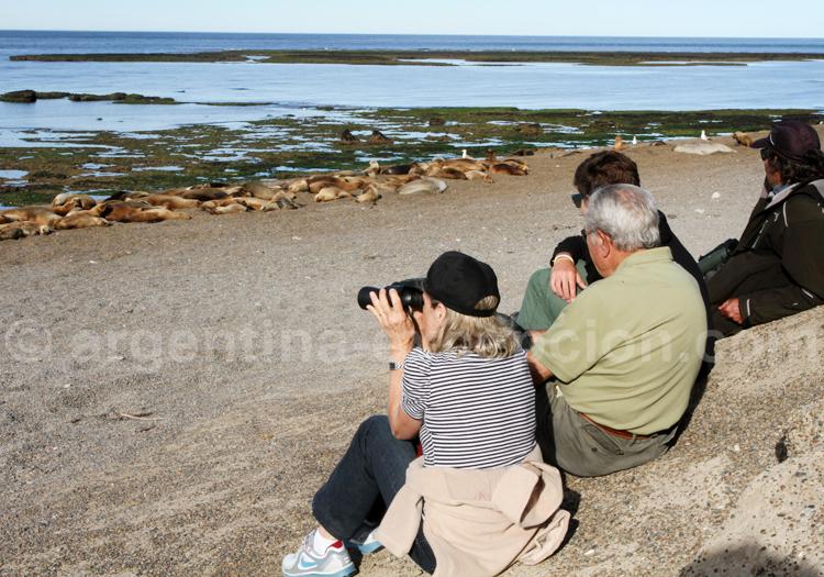 Safari photos en Patagonie
