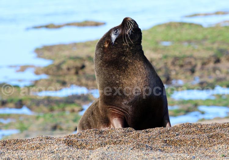 Mammifères marins, Argentine