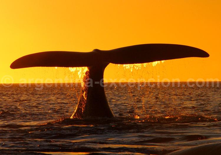 Faune marine, Patagonie Nord