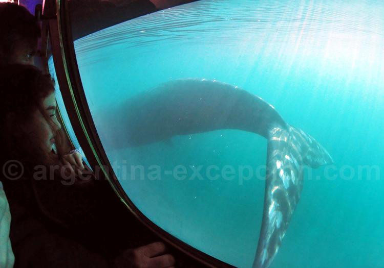 Nager avec les baleines, Péninsule Valdés