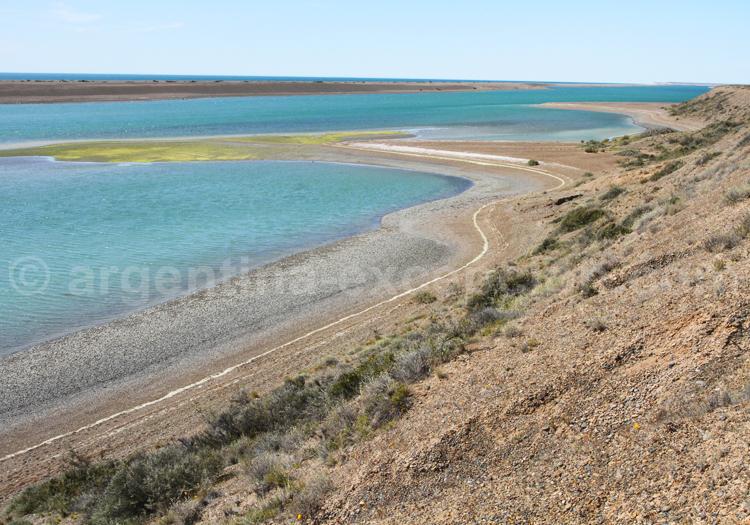 Caleta Valdés, Patagonie Nord