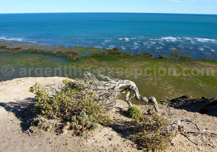 Péninsule Valdés, Patagonie Nord