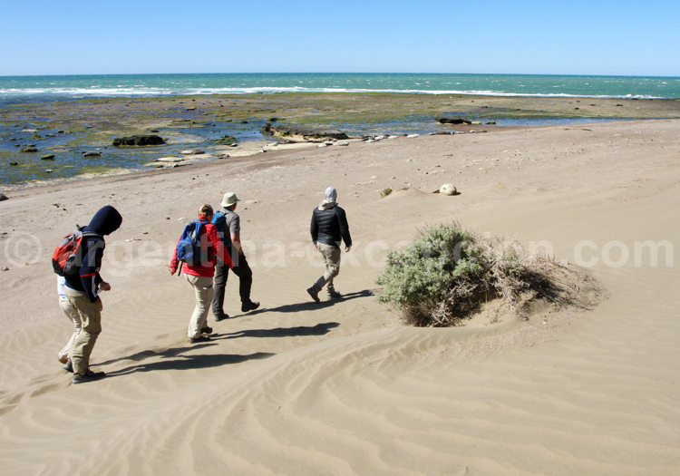 Excursion faune avec guide, Patagonie