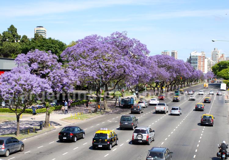 avenue del libertador, palermi