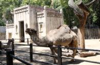Zoo de Palermo