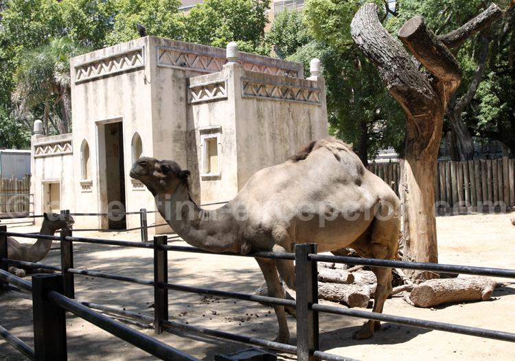 Zoologico de Palermo