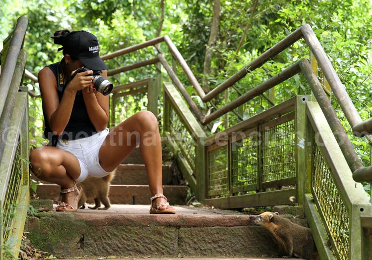 Iguazú, Parc National