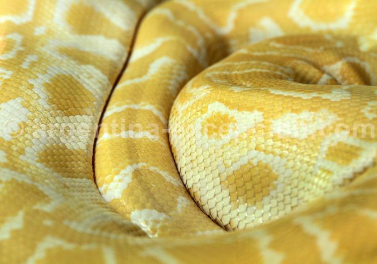 Serpent, chutes d'Iguazú