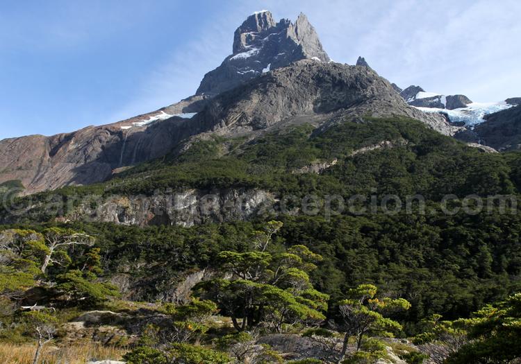 Flore, Patagonie argentine