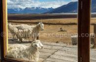 Habitants de Patagonie