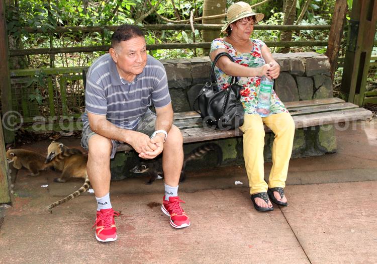 Coatis, Iguazú