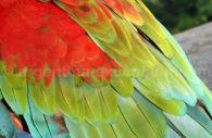 Oiseaux tropicaux, Iguazú